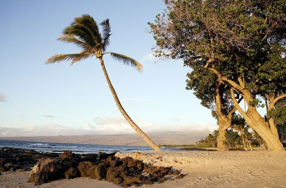 landscape of palm tree on a tropical beach in hawaii