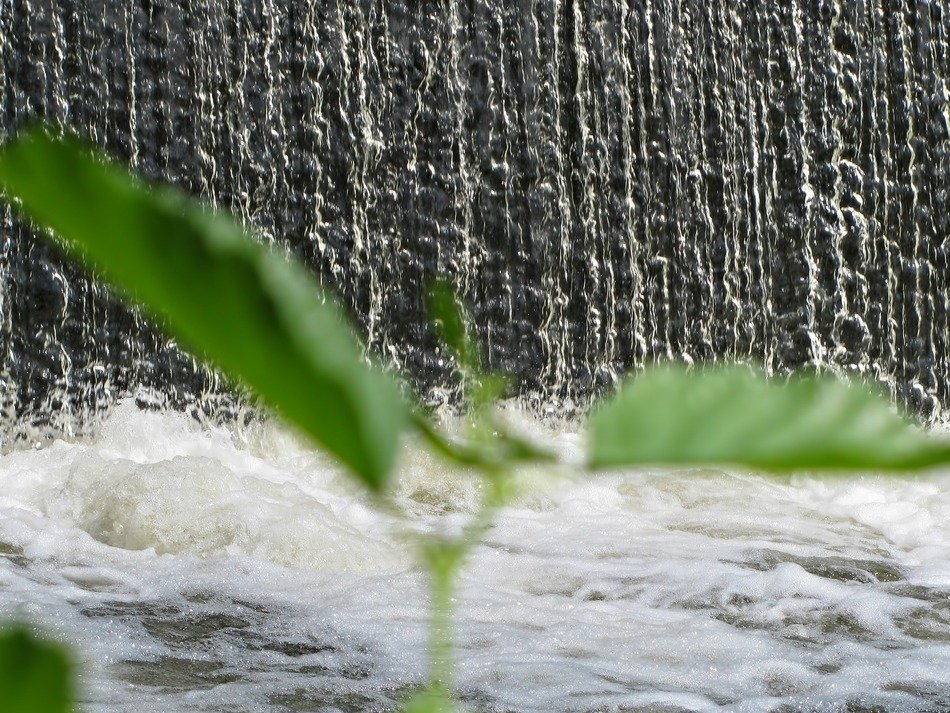 green plant on the background of a waterfall