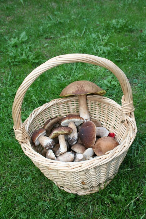 top view of the basket with fungi