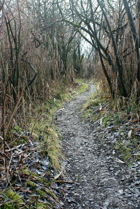 trail through the thicket