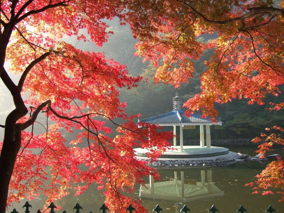 gazebo on the water through the red maple leaves