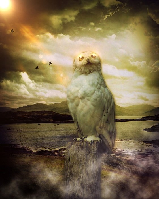 painted mystical owl on the background of a stormy sky