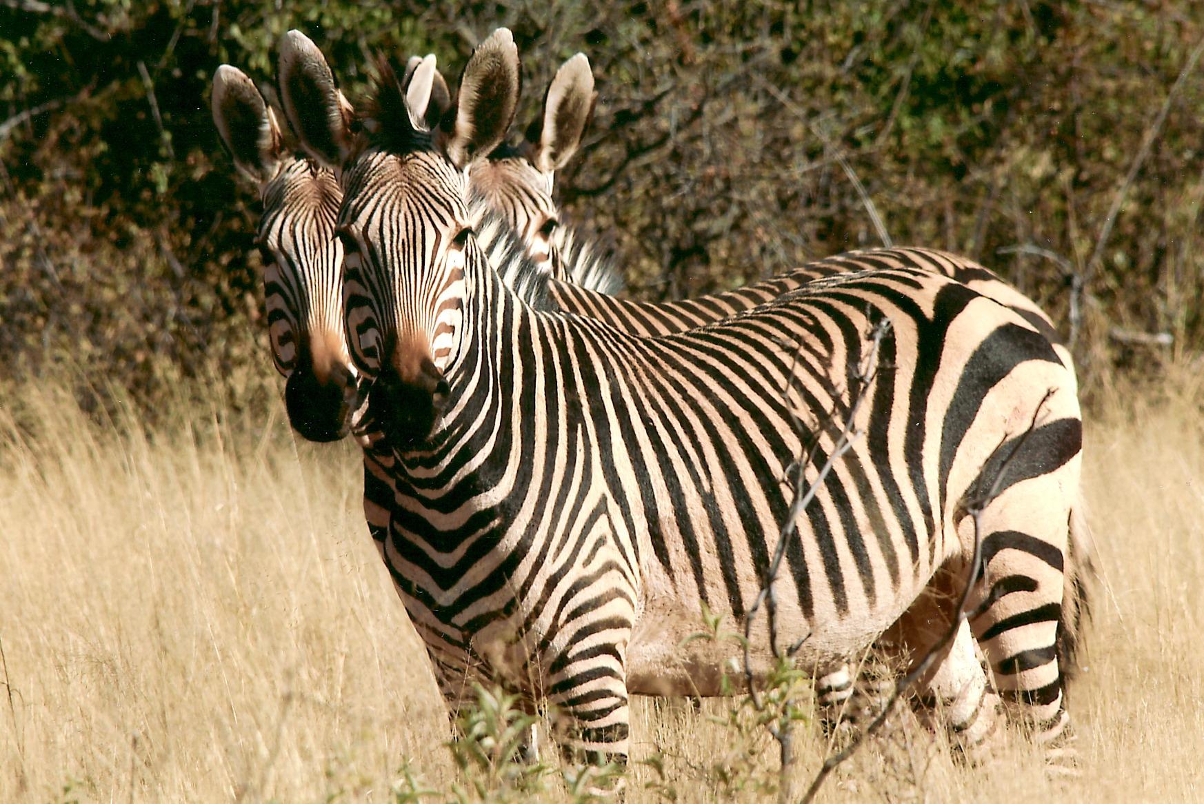 Rare animals list pictures 100 best William Marrion Branham images on Pinterest Message