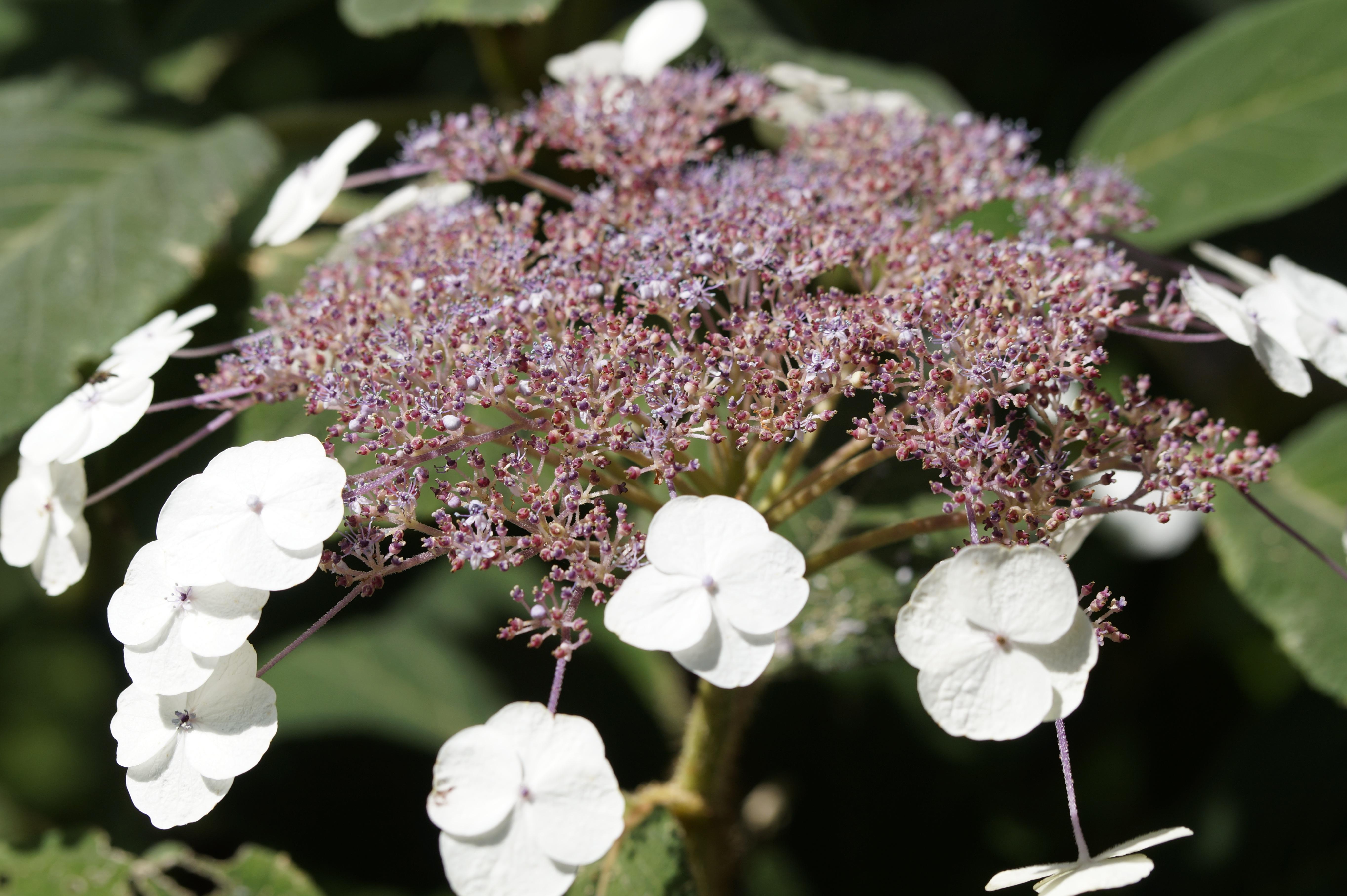 Amazing White Flowers In A Botanic Garden Free Image