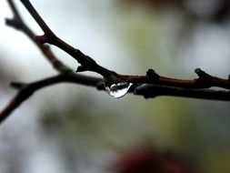 a drop of water is hanging from a tree branch