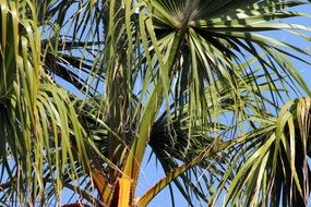 palm tree leaves in summer