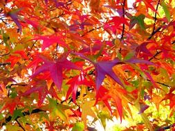 bright autumn leaves on a tree