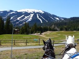 Carriage horses in the British Columbia