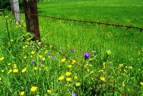 barbed wire fence on flower meadow