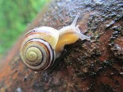 snail on the tree trunk