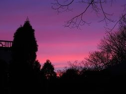 violet-pink sunset over the trees in the park