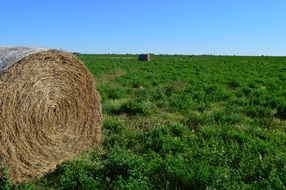 hay bale on green grass