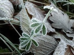 green plants in hoarfrost