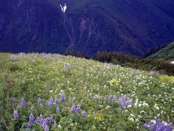 enchanting wildflowers mountains