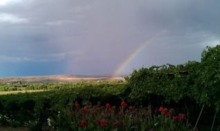 Rainbow over the vineyards in South Africa