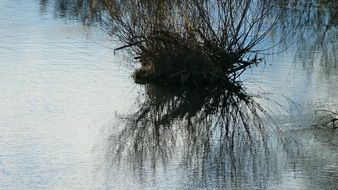 tree reflection on the water