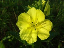 yellow flower in the wild nature