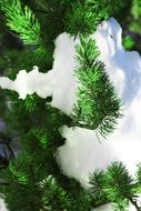 tree fir winter nature forest