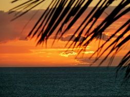 palm leaves on a background of orange sunset sky