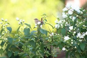 Little bird on a green plant with white flowers