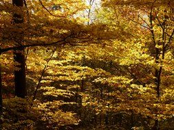 golden october in the forest