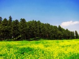 Beautiful, bright, yellow wildflowers near the trees in japan