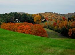 panorama of autumn nature in vermont
