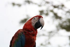 macaw colorful parrot portrait
