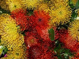 unusual yellow and red flowers