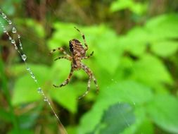 spider in a green forest close up