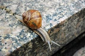 snail on a stone in nature