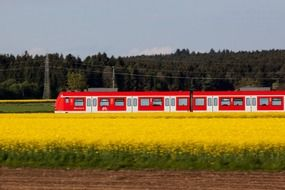 red-white train near the blooming rapeseed field