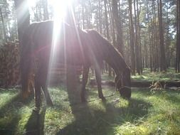 Horse in the forest under the sunlight