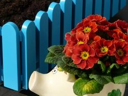 flowers in a pig against the blue fence