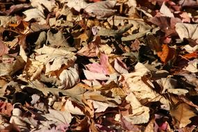 fallen dry leaves on the ground