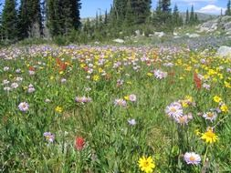 variety of wildflowers in a summer meadow