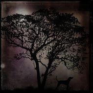 mystical tree in the moonlight