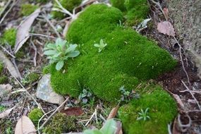 green moss plant