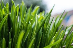 fresh grass green spring nature