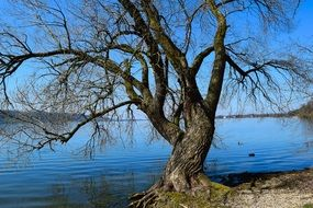 bared tree lake landscape