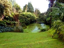 beautiful garden with pond, uk, england, cornwall