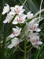 White Orchid is an exotic flower