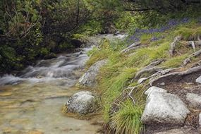 stream of cold mountain water