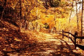 forest trail autumn