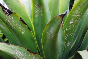 inscriptions on a green plant