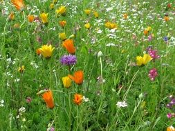 summer meadow wild flowers