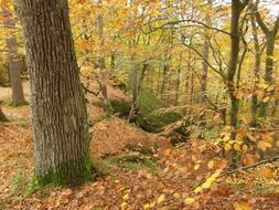 autumn forest for hiking