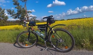 bike rapeseed field way tour