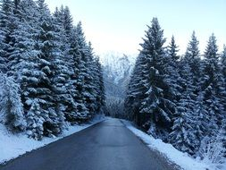 paved road in a winter mountain forest