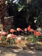 flock of pink flamingos in nature